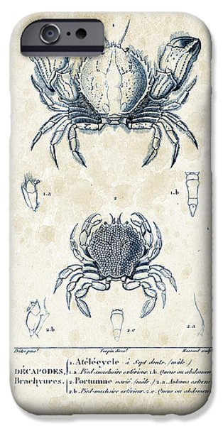 Fossil iPhone Cases - Crustaceans - 1825 - 02 iPhone Case by Aged Pixel