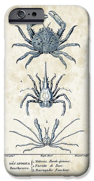 Fossil iPhone Cases - Crustaceans - 1825 - 21 iPhone Case by Aged Pixel