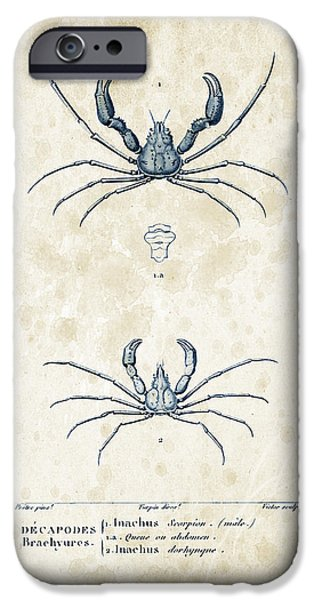 Crab iPhone Cases - Crustaceans - 1825 - 22 iPhone Case by Aged Pixel