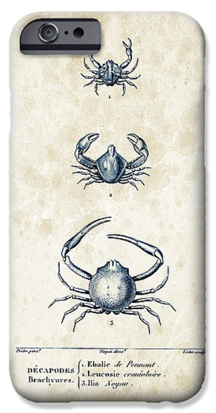 Crab iPhone Cases - Crustaceans - 1825 - 25 iPhone Case by Aged Pixel