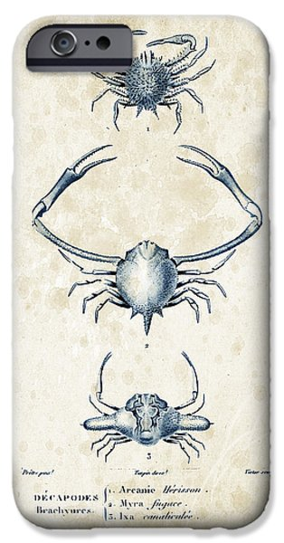 Crab iPhone Cases - Crustaceans - 1825 - 26 iPhone Case by Aged Pixel