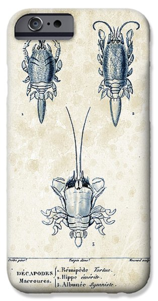Crab iPhone Cases - Crustaceans - 1825 - 27 iPhone Case by Aged Pixel