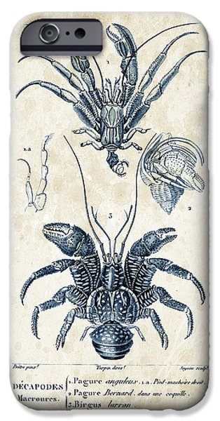 Crab iPhone Cases - Crustaceans - 1825 - 28 iPhone Case by Aged Pixel
