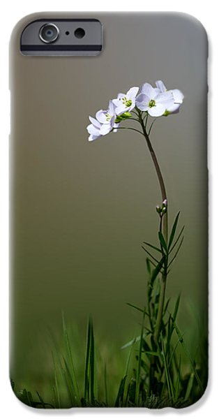 Cuckoo iPhone Cases - Cuckoo Flower iPhone Case by Ian Hufton