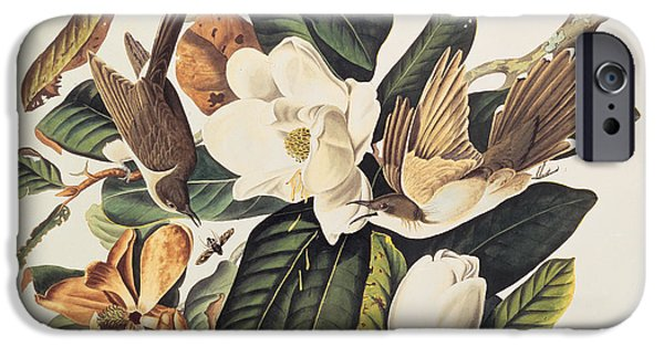 Plant Drawings iPhone Cases - Cuckoo on Magnolia Grandiflora iPhone Case by John James Audubon