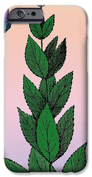 1890Õs iPhone Cases - Culvers Root iPhone Case by Eric Edelman
