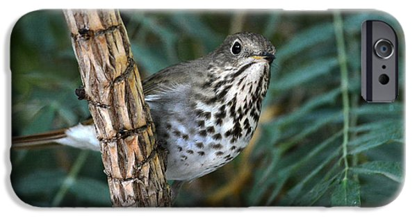 Fine Art Photo iPhone Cases - Curious Bird iPhone Case by Dan Holm