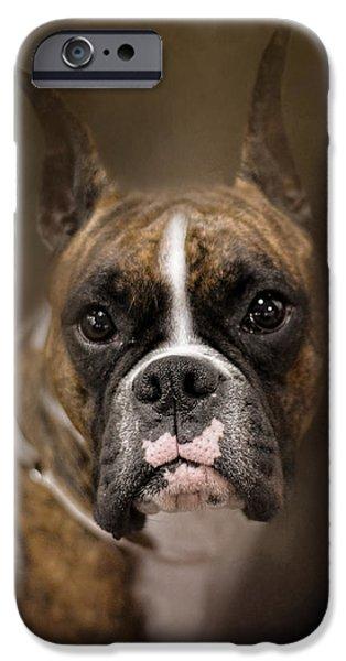 Boxer iPhone Cases - Curious Boxer iPhone Case by Jai Johnson