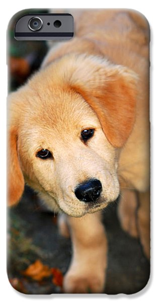 Fuzzy Golden Puppy iPhone Cases - Curious Golden Retriever Pup iPhone Case by Christina Rollo