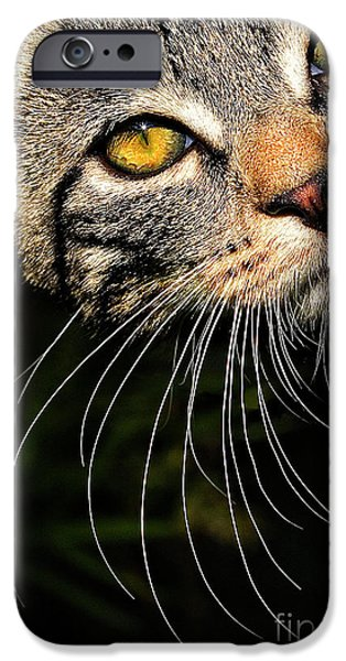Watching iPhone Cases - Curious Kitten iPhone Case by Meirion Matthias