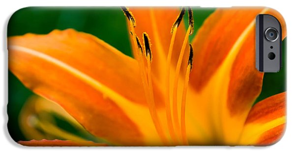 Young iPhone Cases - Curves of Orange iPhone Case by Shelby  Young