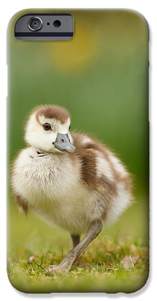 Cute Bird iPhone Cases - Cute Gosling iPhone Case by Roeselien Raimond