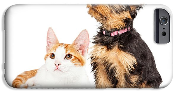 Cute Puppy iPhone Cases - Cute Puppy and Kitten Sitting to Side  iPhone Case by Susan  Schmitz