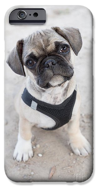 Dog Close-up iPhone Cases - Cute puppy looking up iPhone Case by Carsten Reisinger
