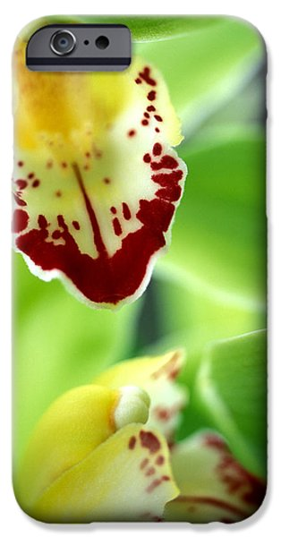 Cymbidium Seafoam Emerald Orchid iPhone Case by Kathy Yates