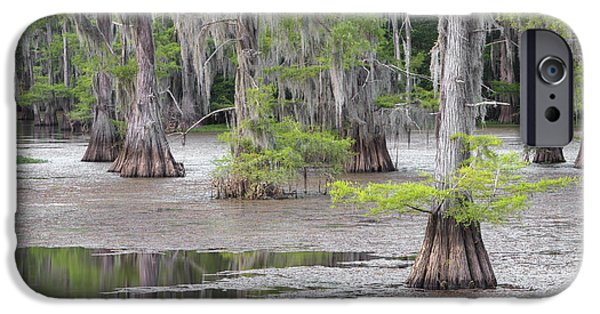 Caddo Lake iPhone Cases - Cypress and Spanish Moss of Caddo Lake State Park 4 iPhone Case by Rob Greebon