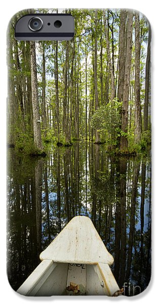 Cypress Trees iPhone Cases - Cypress Garden Swamp iPhone Case by Dustin K Ryan