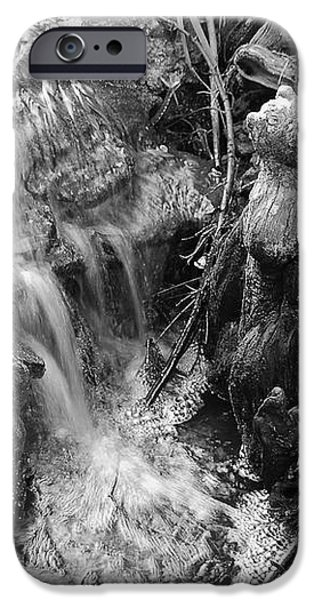 Cypress Knees II iPhone Case by Suzanne Gaff