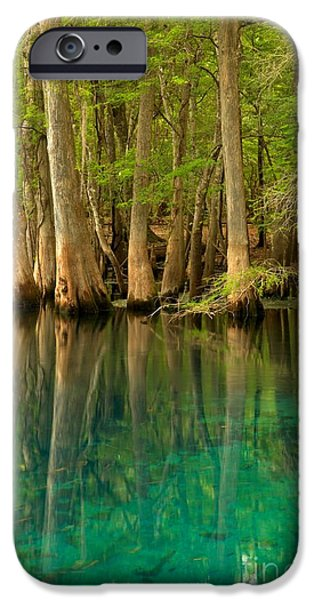 Chiefland iPhone Cases - Cypress Reflections In Blue iPhone Case by Adam Jewell