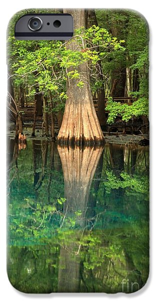 Manatee iPhone Cases - Cypress Reflections In Manatee Spring Waters iPhone Case by Adam Jewell