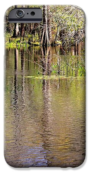 Cypress Trees along the Hillsborough River iPhone Case by Carol Groenen