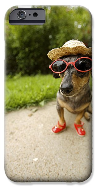 Dog Close-up iPhone Cases - Dachshund In Sunglasses, Straw Hat iPhone Case by Gillham Studios
