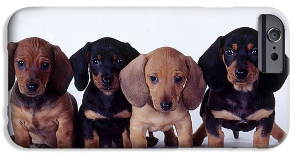 Fauna Photographs iPhone Cases - Dachshund Puppies  iPhone Case by Carolyn McKeone and Photo Researchers
