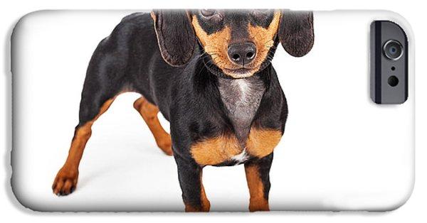 Mini Dachshund iPhone Cases - Dachshund Puppy Dog Standing Lookng Forward iPhone Case by Susan  Schmitz