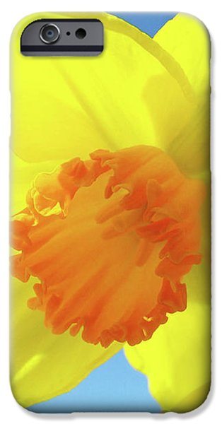Daffodil Flowers Artwork 18 Spring Daffodils Art Prints Floral Artwork iPhone Case by Baslee Troutman