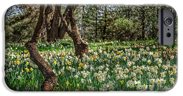 Oak Creek iPhone Cases - Daffodil Hill Gardens iPhone Case by Dianne Phelps