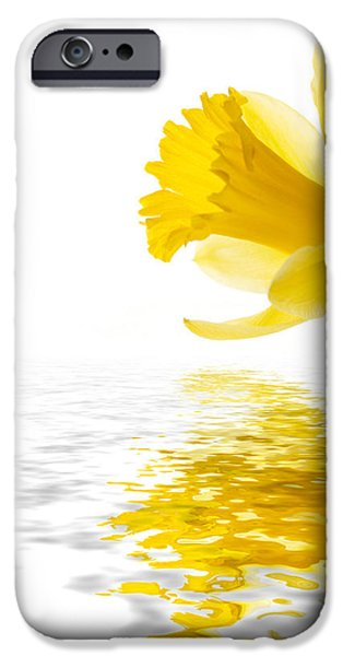 Flora iPhone Cases - Daffodil reflected iPhone Case by Jane Rix