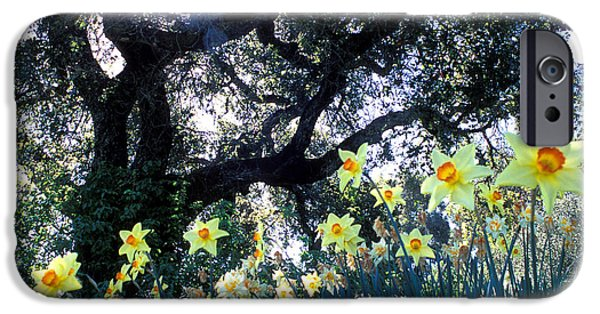 Tree Art Print iPhone Cases - Daffodils and the Oak iPhone Case by Kathy Yates