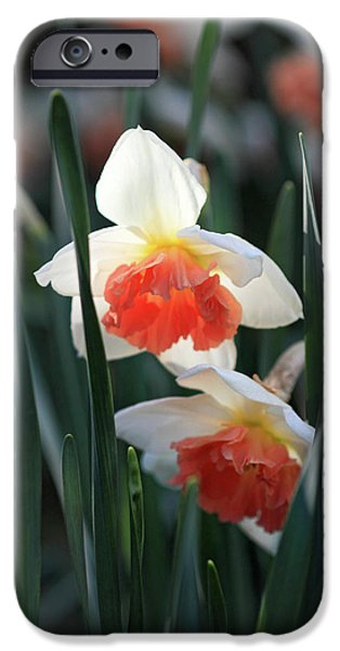 Daffodils spring is here iPhone Case by Pierre Leclerc Photography