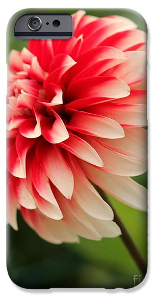 Stellar iPhone Cases - Dahlia named Hilltop Stella iPhone Case by J McCombie