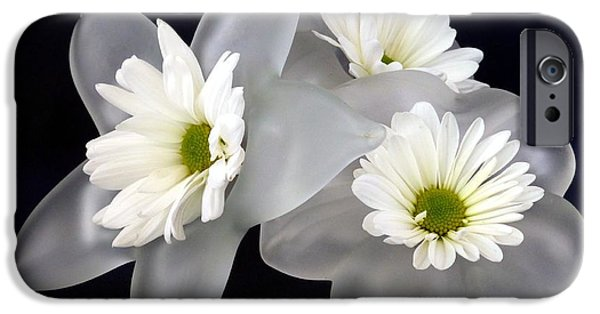 Botanical Photographs iPhone Cases - Daisies on Glass  iPhone Case by Barbie Corbett-Newmin