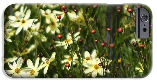 Meadow Photographs iPhone Cases - Daisy Days iPhone Case by Marcia Lee Jones