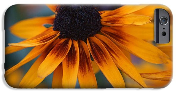 Lincoln iPhone Cases - Daisy iPhone Case by Dimitry Papkov