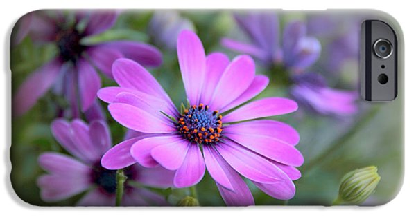 Daisy Bud iPhone Cases - Daisy Dream iPhone Case by Jessica Jenney