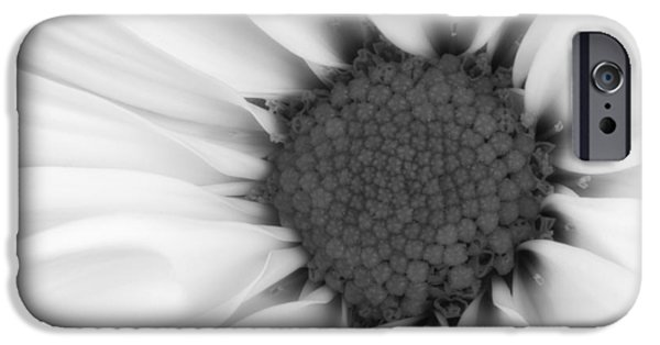 Close Up Floral iPhone Cases - Daisy Flower Macro iPhone Case by Tom Mc Nemar
