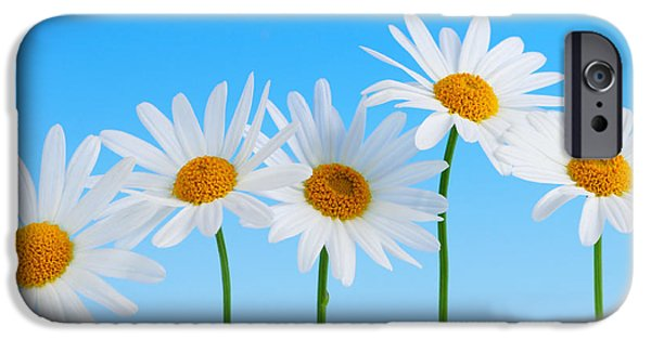 Macro Photographs iPhone Cases - Daisy flowers on blue background iPhone Case by Elena Elisseeva