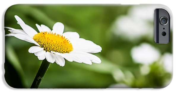 Young iPhone Cases - Daisy in the Field iPhone Case by Shelby  Young