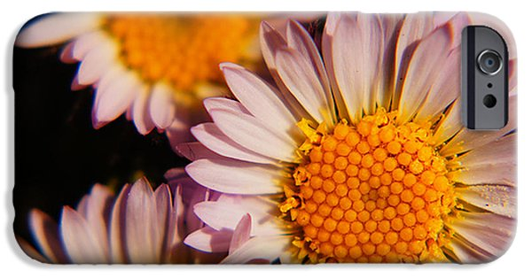 Disc iPhone Cases - Daisy Mt. Adams iPhone Case by James Mikkelsen