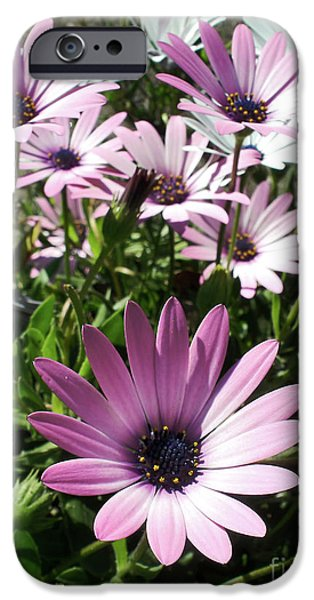 Daisy Patch iPhone Case by Kaye Menner