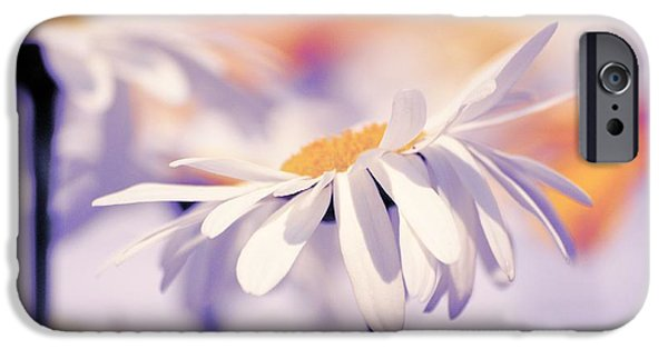 White Daisies iPhone Cases - Daisyday 11b iPhone Case by Variance Collections