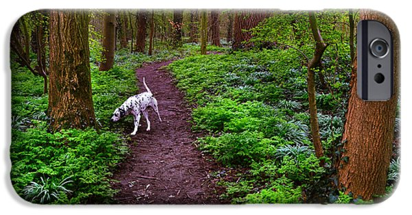 Dog In Landscape iPhone Cases - Dalmatian In the Spring Woods iPhone Case by Jenny Rainbow