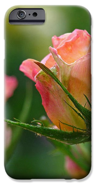 Dance Your Bud Off iPhone Case by Juergen Roth