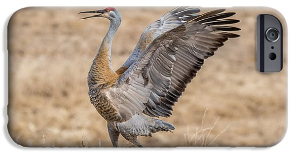 Sea Birds iPhone Cases - Dancing Crane iPhone Case by Paul Freidlund