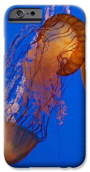 Marine iPhone Cases - Dancing Sea Nettles iPhone Case by Venetia Featherstone-Witty