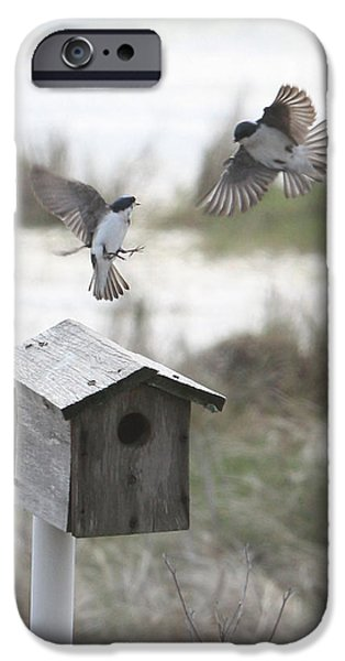 Barn Swallow iPhone Cases - Dancing Tree Swallows iPhone Case by Captain Debbie Ritter