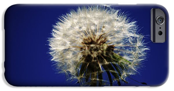 Abstract Digital Photographs iPhone Cases - Dandelion 2015 Two iPhone Case by Tina M Wenger